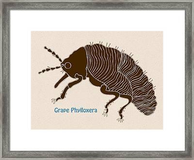 Grape Phylloxera Framed Print