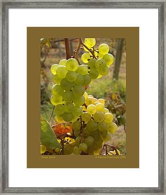 Grape Spiral Framed Print