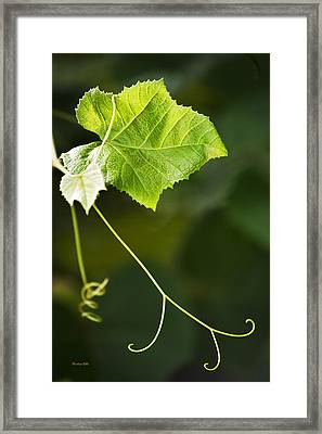 Grape Vine Framed Print by Christina Rollo
