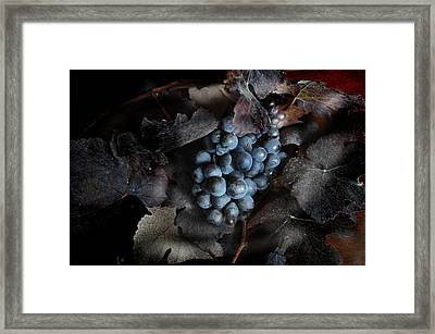 grape vine I Framed Print by Jon Daly