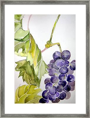 Grape Vine Framed Print by Mindy Newman