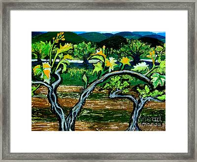 Grape Vines In Augusta Wine Country Framed Print by Genevieve Esson