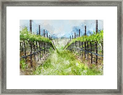 Grape Vines In Napa Valley California Framed Print by Brandon Bourdages