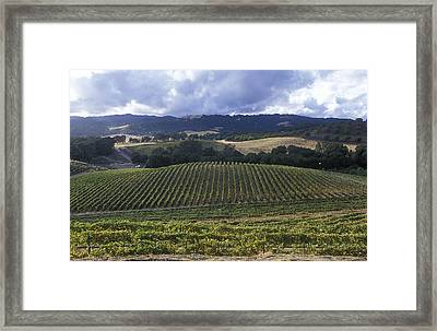 Grape Vines On Opolo Vineyards Framed Print by Rich Reid