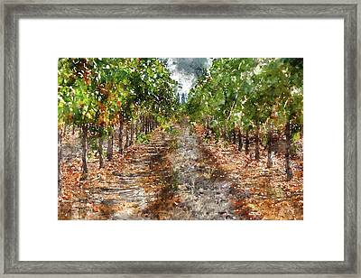 Grape Vineyard In Napa Valley California Framed Print by Brandon Bourdages