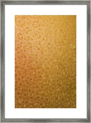 Grapefruit Skin Framed Print