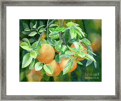 Grapefruit With Background Framed Print by Sharon Freeman