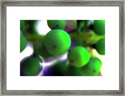 Grapes Framed Print by Bransen Devey
