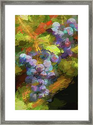 Grapes In Abstract Framed Print by Penny Lisowski