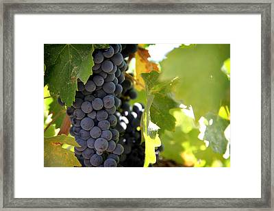 Grapes Framed Print by Nancy Ingersoll