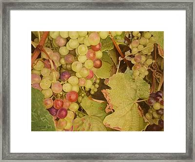 Grapes On A Vine Framed Print by Rosalind Batty