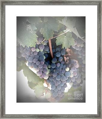Grapes On The Vine I Framed Print by Sherry Hallemeier