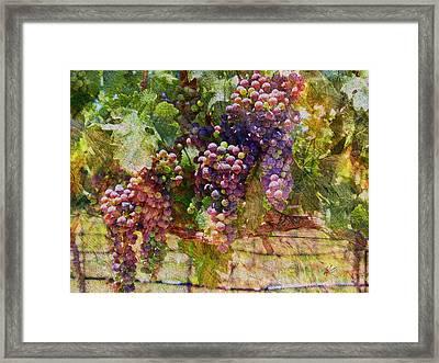 Grapes On The Vine Framed Print by Kiki Art