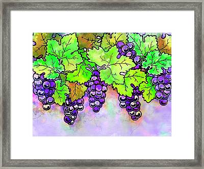 Purple Grapes On The Vine - Vintage Wine Harvest - 1 In A Series Framed Print