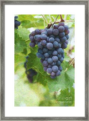 Grapes On The Vine Framed Print by Tim Gainey