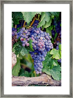 Framed Print featuring the photograph Grapes by Sandy Adams