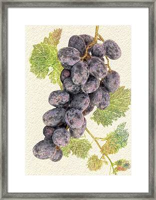 Luscious Grapes Framed Print
