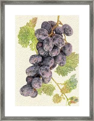 Luscious Grapes Framed Print