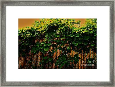 Grapevine Abstract Framed Print by Marsha Heiken