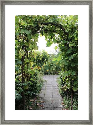 Grapevine Arch In Garden Framed Print by Carol Groenen