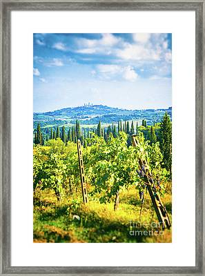 Framed Print featuring the photograph Grapevine In San Gimignano Tuscany by Silvia Ganora