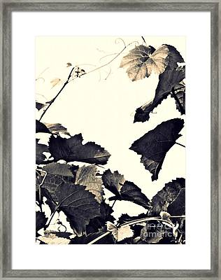 Grapevine In Sepia Framed Print by Sarah Loft