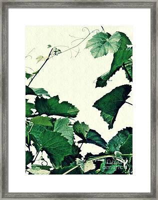 Grapevine Framed Print