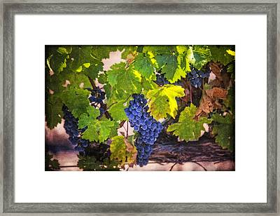 Grapevine With Texture Framed Print by Garry Gay