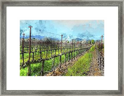 Grapevines In A Row In Napa Valley California Framed Print by Brandon Bourdages