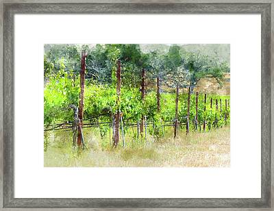 Grapevines In California Framed Print by Brandon Bourdages