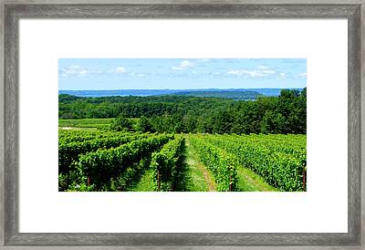 Grapevines On Old Mission Peninsula - Traverse City Michigan Framed Print by Michelle Calkins