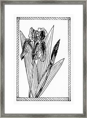 Graphic Iris Framed Print by Masha Batkova