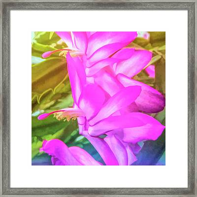 Framed Print featuring the photograph Graphic Rainbow Christmas Cactus Flower by Aimee L Maher Photography and Art Visit ALMGallerydotcom