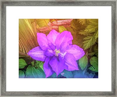 Graphic Rainbow Passion Vine Framed Print