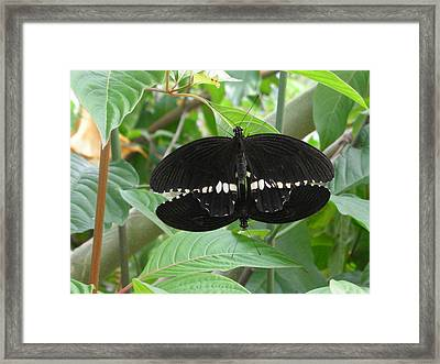 Graphic Sex In The  Butterfly House  Framed Print