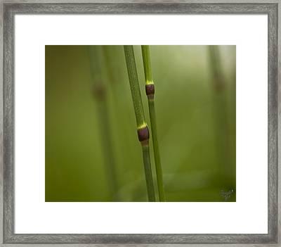 Gras Framed Print