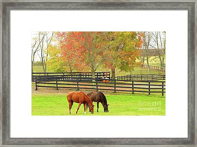 Grazing Time Framed Print