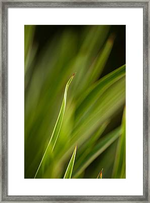 Grass Abstract 2 Framed Print by Mike Reid