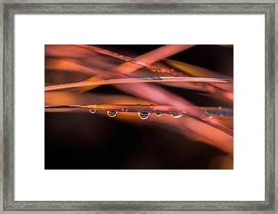 Grass Abstract Framed Print by Elena E Giorgi