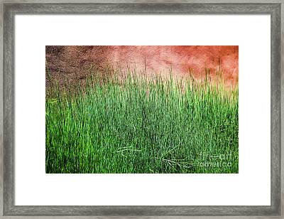 Grass Against A Wall Framed Print by Jon Burch Photography