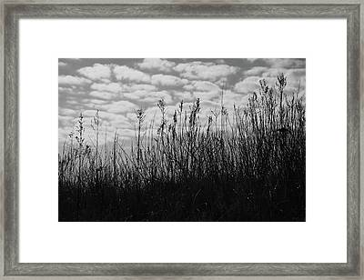 Grass Against The Background Of Clouds Framed Print by Mariia Kalinichenko