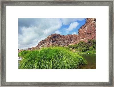 Grass Along John Day River In Central Oregon Framed Print