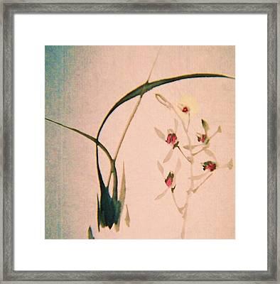 Grass And Buds Framed Print by JuneFelicia Bennett