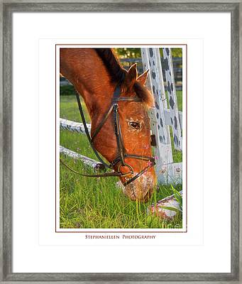 Grass And Flowers Framed Print