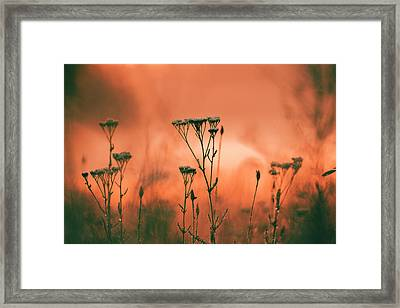 Grass And Plants In The Morning Mist Framed Print