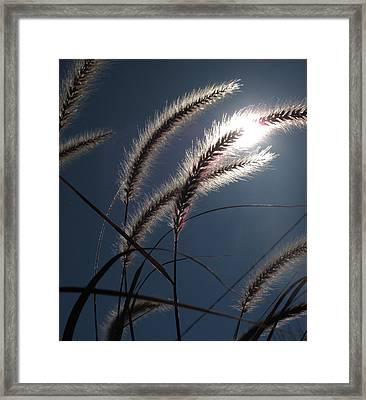Grass And Sun  Framed Print