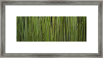 Grass Blades Panorama Framed Print by Steve Gadomski