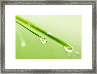 Grass Blades With Water Drops Framed Print by Elena Elisseeva