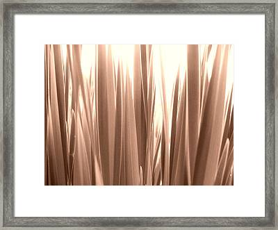 Grass Framed Print by Gonca Yengin