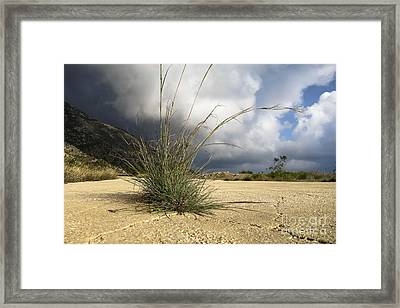 Grass Growing Out Of Crack In Tarmac Framed Print by Perry Van Munster